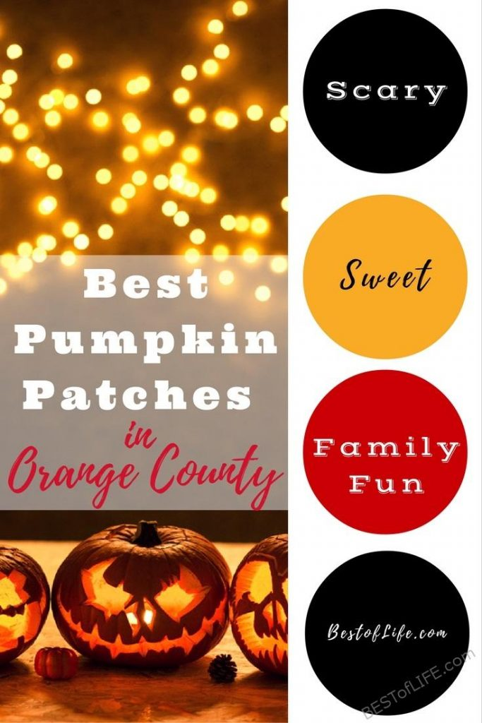 Clean out the trunk space in your car and stock up on some pumpkins from the best pumpkin patches in Orange County.