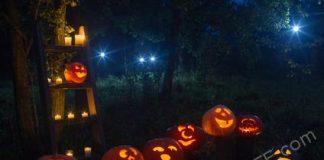 Halloween Pumpkin Patches