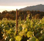 Obsidian Ridge Impressive Red Wines