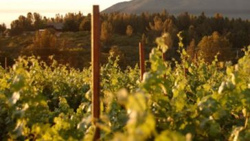 Obsidian Ridge Impressive Red Wines