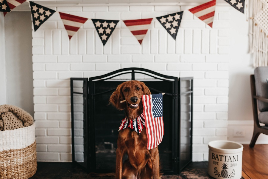 July 4th Decorations A Dog Holding a Flag