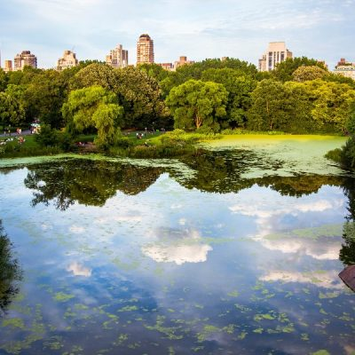 Best Things to Do in Central Park