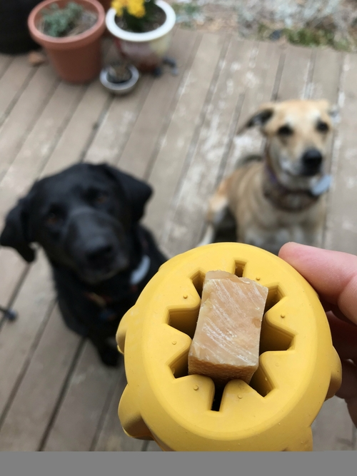A rubber gear treat holder is a great chew toy that dogs will love to play with. It cleans your dog's teeth as they chew, too! Treat Dispensing Dog Toy | Dog Treat Toys | Interactive Dog Toys | Rubber Chew Toys with Food | Teeth Cleaning Dog Toys | Durable Chew Toys for Dogs #chewtoy #dogowners