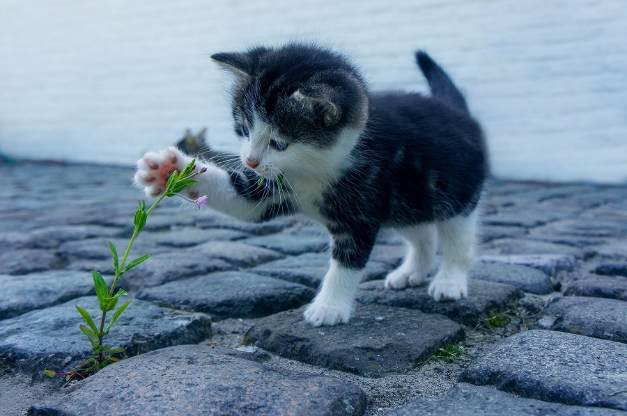 Cute Cat Quotes to Make you Smile Kitten Playing with a Flower