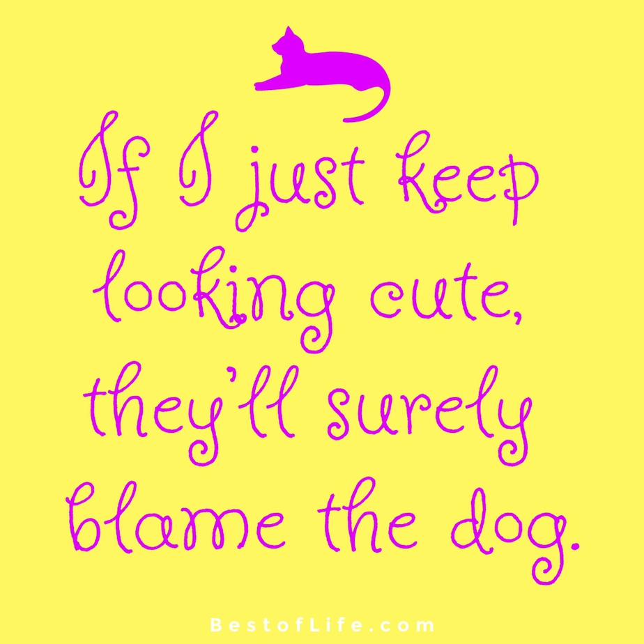 Funny and Cute Cat Quotes to Make you Smile Blame the Dog
