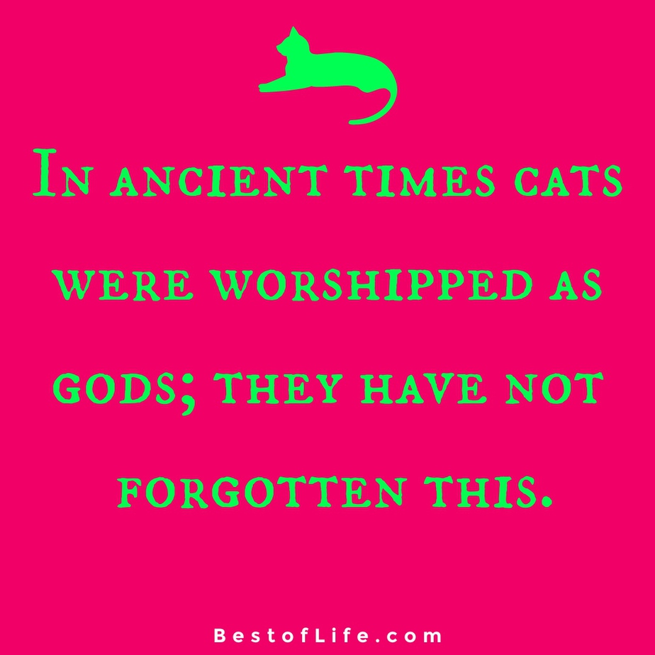 Funny and Cute Cat Quotes to Make you Smile Cat Worship