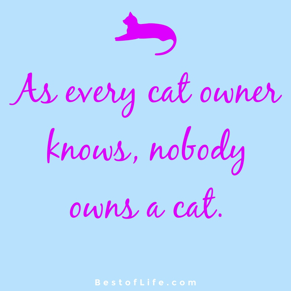 Funny and Cute Cat Quotes to Make you Smile Owning a Cat