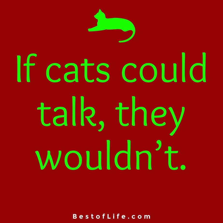 Funny and Cute Cat Quotes to Make you Smile Talking Cats