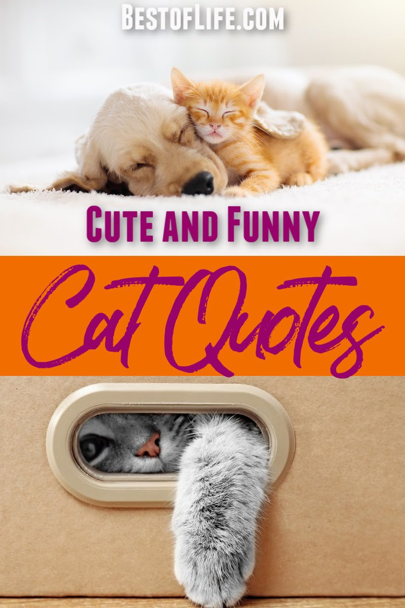 People can get lost down a rabbit hole when watching funny cat videos, and you can get the same joy from cute cat quotes as well. Funny Cat Quotes for Instagram | Clever Cat Sayings | Funny Cat Sayings | Sleeping Cat Captions for Instagram | Quotes About Cats | Funny Quotes About Cats | Cute Quotes About Cats | Quotes for Cat People #cats #quotes via @thebestoflife