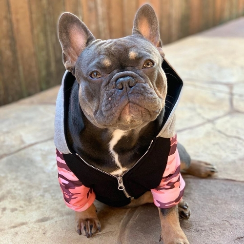 Give your dog a bit of style with this easy to dress French bulldog hoodie that has a working hood and pockets. Dog Clothes | Clothing for Dogs | Stylish Clothes for Dogs | Dog Style | Jackets for Dogs | Sweaters for Dogs | Sweatshirts for Dogs | Dog Clothing | Hoodies for Dogs #hoodie #dogs