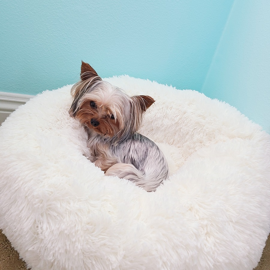 Orthopedic Pet Bed Benefits Dog Lying on a Pet Bed