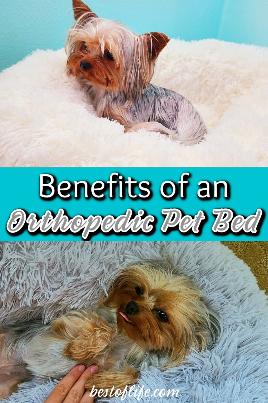 Your fur baby will love these orthopedic pet bed benefits and will sleep better because of them. This pet bed will also help keep your pet's joints aligned while they sleep. Cat or Dog Bed | Raised Dog Bed | Elevated Dog Bed | Orthopedic Dog Bed | What Makes a Good Dog Bed | Tips for Pet Health | Pet Accessories #pets #tips via @thebestoflife