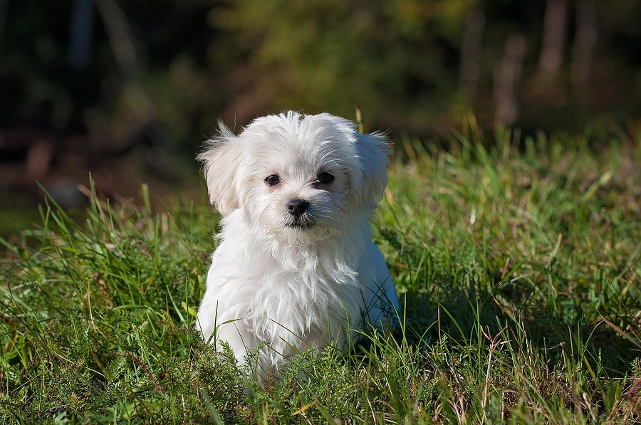 Dog Accessories A White Puppy Sitting in a Field