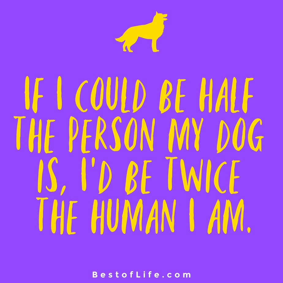 Sweet Dog Quotes About Love Human If I could be half the person my dog is, I'd be twice the human I am.