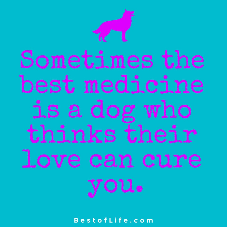 Sweet Dog Quotes About Love Medicine Sometimes the best medicine is a dog who thinks their love can cure you.