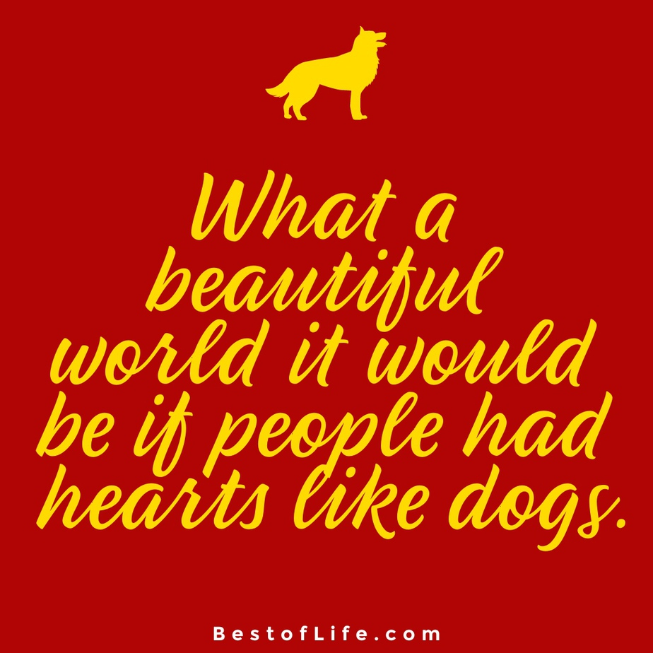 Sweet Dog Quotes About Love World What a beautiful world it would be if people had hearts like dogs.