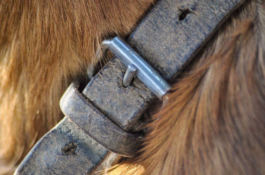 What to Look for in Dog Collars Close Up of a Leather Collar on a Dog