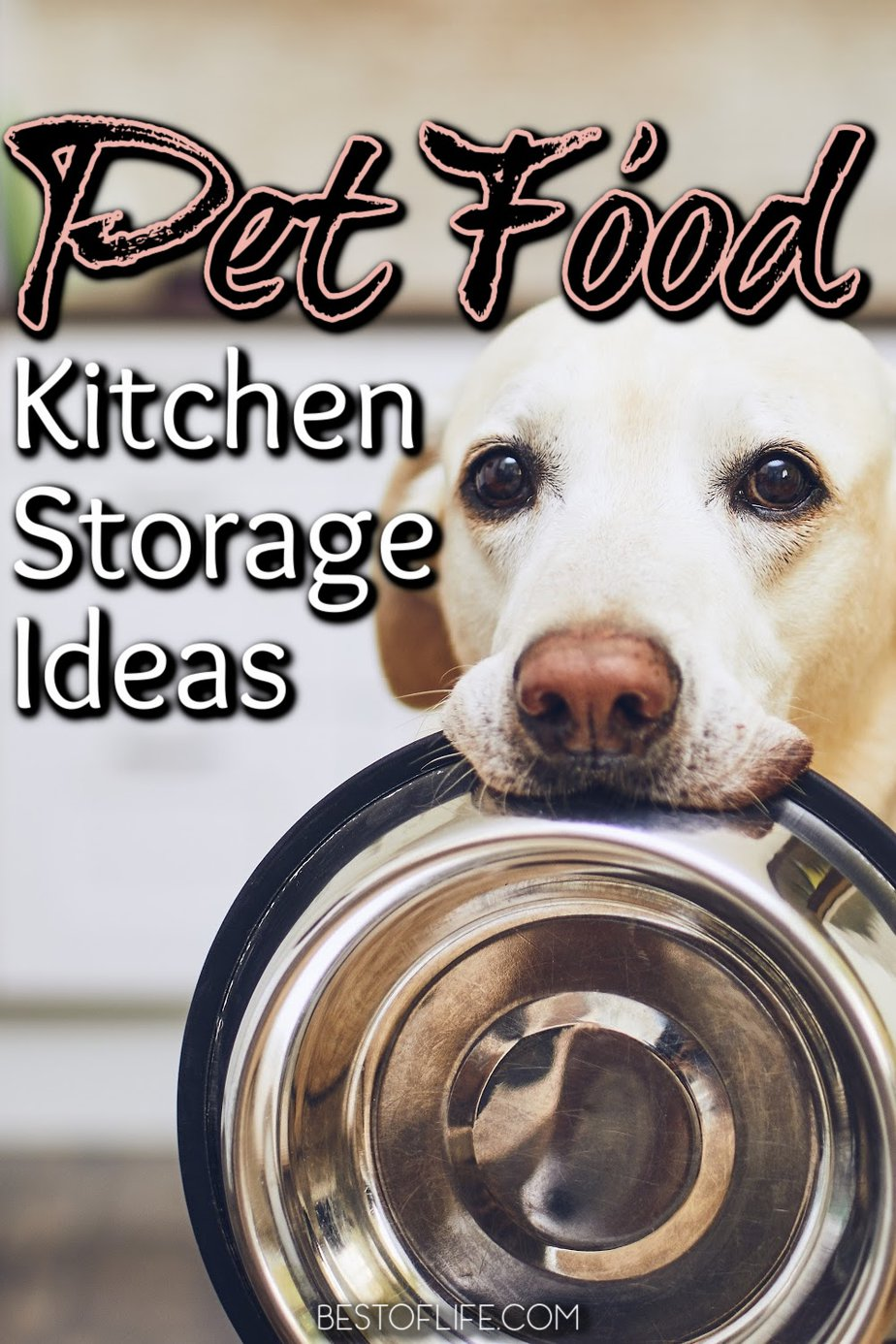The best pet food storage ideas for kitchens can help you monitor how much food your dog has eaten and make sure it stays fresh and safe to enjoy. Pet Food Storage Container   Unique Dog Food Storage Containers   Pet Food Storage Cabinet   Pet Food Packaging   Pet Food Station   Storage Ideas for Pet Food   Dog Food Storage   Canned Pet Food Storage Tips   Cat Food Tips   Healthy Cat Food Ideas #pets #petfood via @thebestoflife