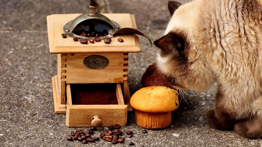 DIY Pet Treats Cat Looking at a Muffin