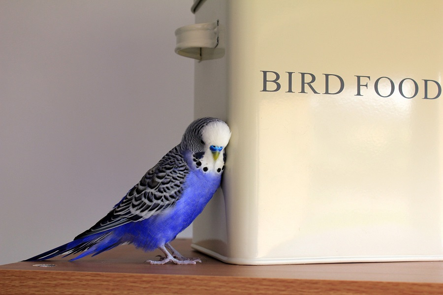 Pet Food Storage Ideas for Kitchens Bird Next to a Container That Says Bird Food