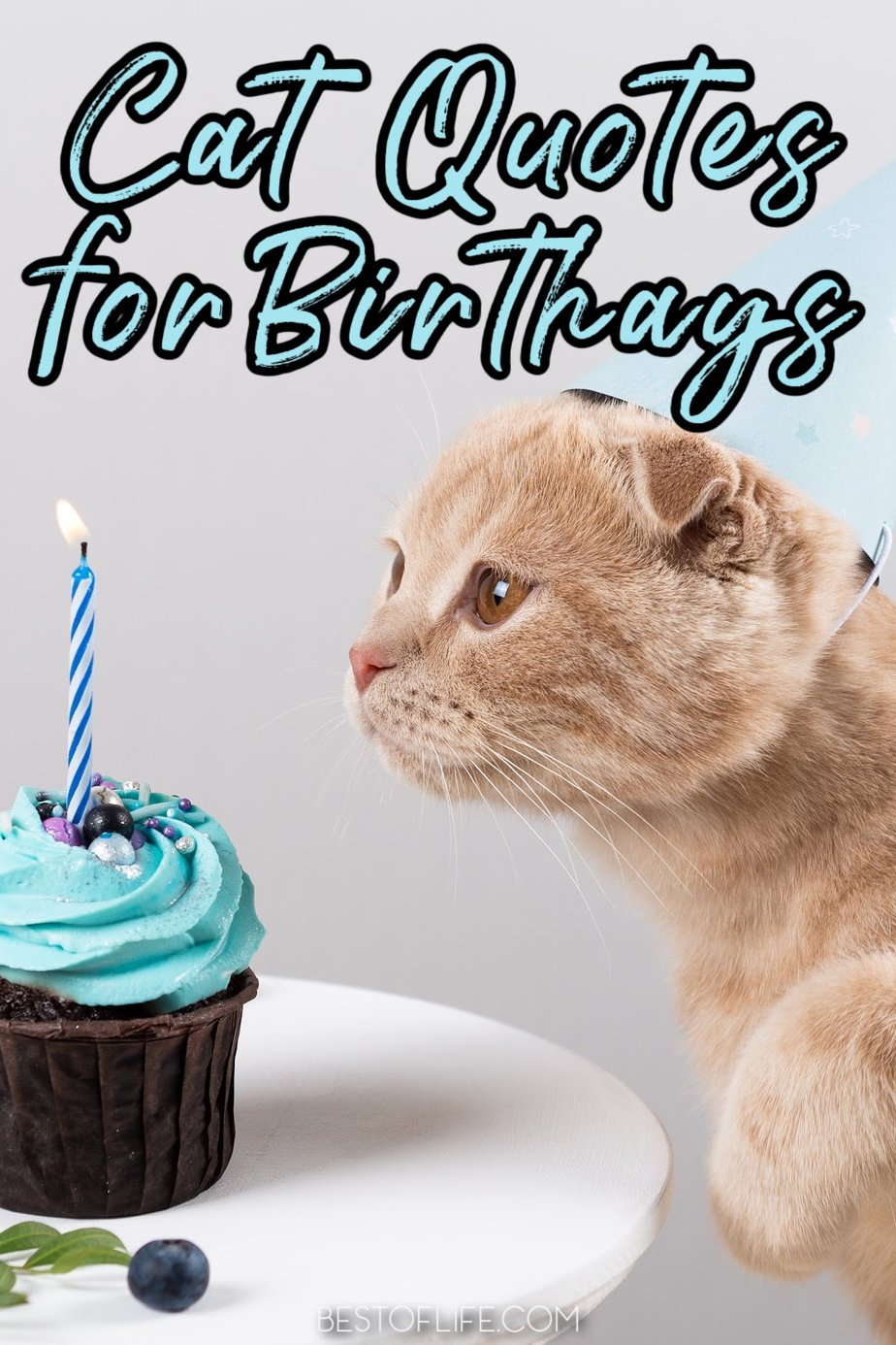 These fun cat quotes for birthdays are perfect for those who love their fur babies! Inspirational Cat Quotes   Funny Cat Quotes   Quotes About Cats   Quotes for Cat Lovers   Cat People Quotes   Birthday Quotes   Birthday Wishes #cats #birthday via @thebestoflife