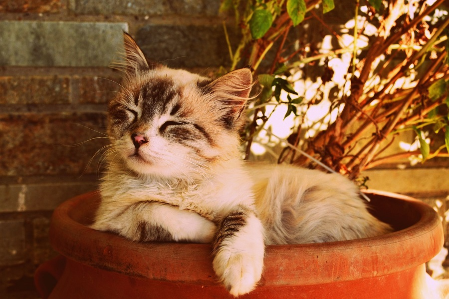 Cat Quotes for Birthdays Cat Lying in a Planter