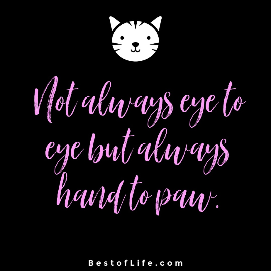 Cat Quotes for Mother's Day Not always eye to eye but always hand to paw.