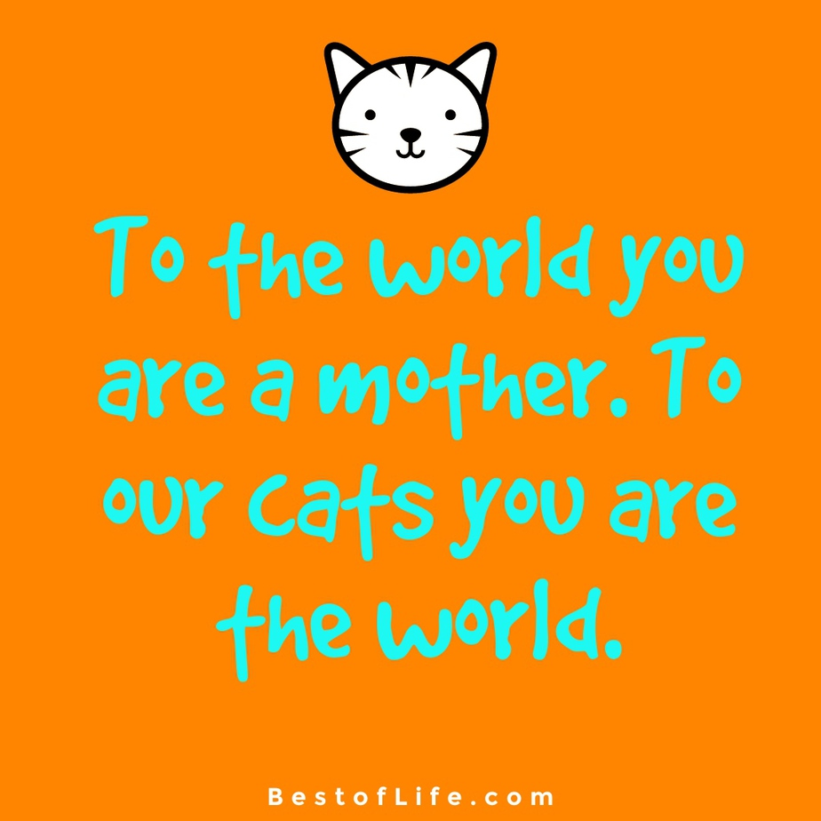 Cat Quotes for Mother's Day To the world you are a mother. To our cats you are the world.