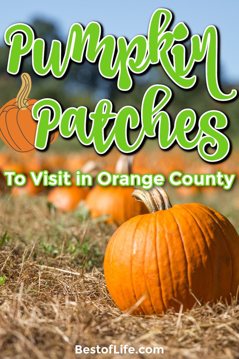 Visit the best pumpkin patches in Orange County for a fun filled day of fall traditions like picking pumpkins, enjoying fall foods, hay rides, and more. Things to do in October in Orange County | October Family Activities | Orange County Pumpkin Patches | Fall Activities | Halloween Activities Orange County | Orange County Halloween | Things to do in Fall #halloween #orangecounty via @thebestoflife